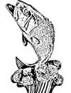 Kalastuskauppa - NKK - Netti KauppaKeskus